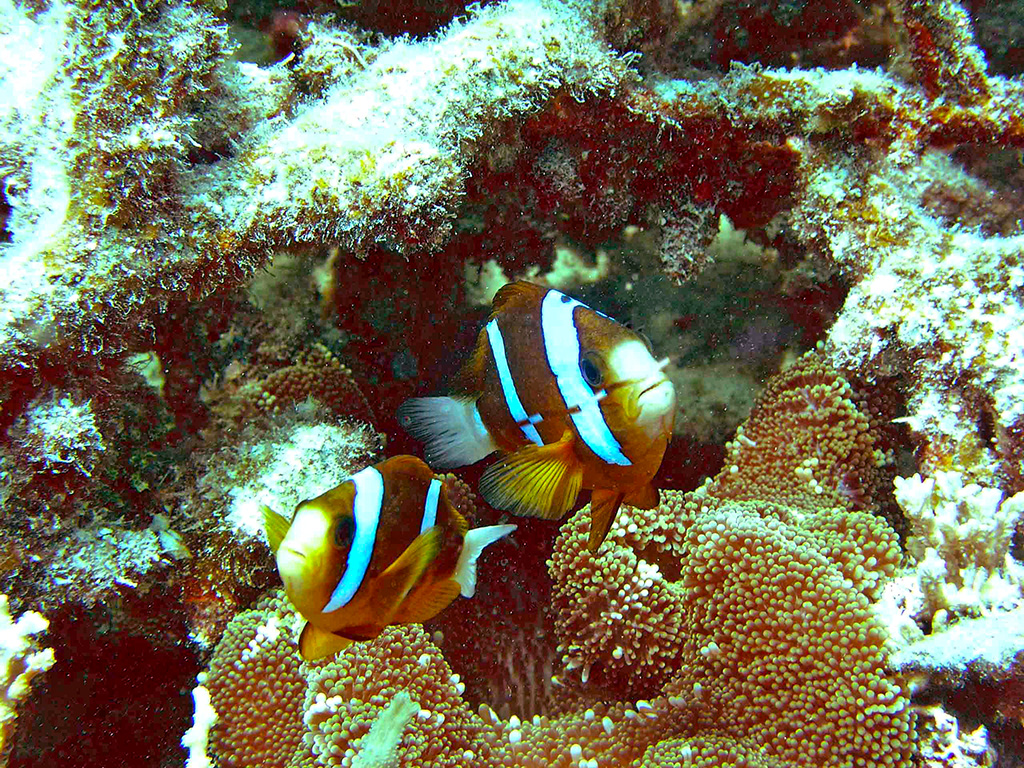 Quotes On Fringing Reefs: 4-Day Great Barrier Reef School Excursion